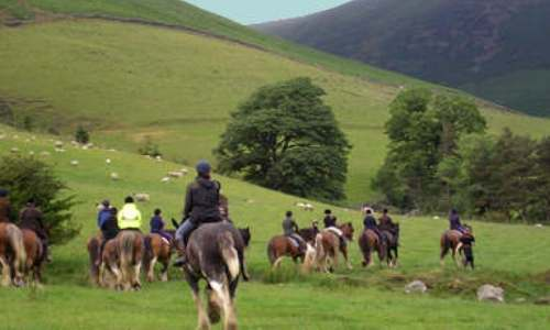cumbrian heavy horses lake district